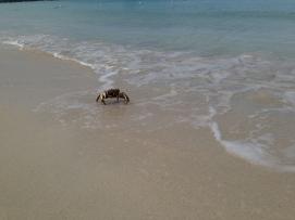 little crabby.