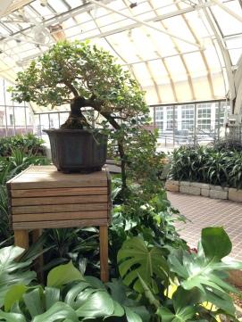 And more bonsai.
