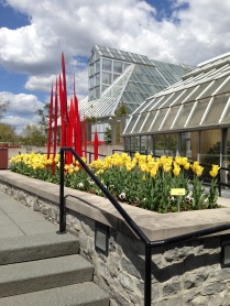 Chihuly in the tulips